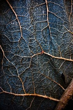 This piece of artwork shows texture. It looks like a rough texture with the roots coming out more then the leaf it self.