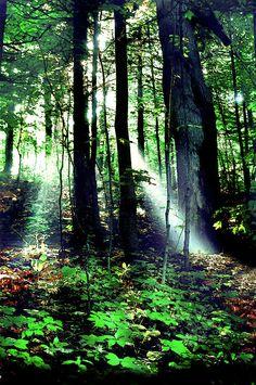 ✮ Shafts of Light by Phil Koch