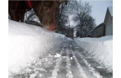 39 Perfectly Timed Photos Of Man's Best Friend That Are Doggone Funny (Slide #16) - Pawsome