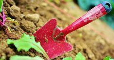 """Moni puutarhaohje alkaa neuvolla """"paranna maata tarvittaessa"""". Mutta mitä se tarkoittaa käytännössä? Se selviää tästä postauksesta!!"""