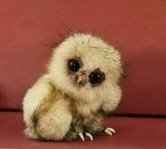 A baby owl! Isn´t this the cutest thing ever...ok besides a baby penguin! lol! love you sis !