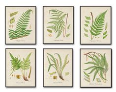 British Ferns Botanical Print Set - Printed on archival canvas - Makes a charming vintage display - Multiple Sizes - Free US Shipping – Belle Botanica