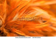 Brown Chicken feathers in soft and blur style for the background