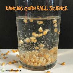 Dancing corn makes a fun fall STEM activity for kids. Watch as the corn is lifted by bubbles and appears to dance around the jar...