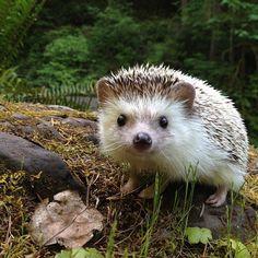 ever wanted to hug a hedgehog?