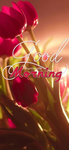 Latest good morning flower images and pic for brother, sister, friends and family. Share the morning greetings and make them Good Morning Beautiful Pictures, Good Morning Beautiful Flowers, Good Morning Nature, Good Morning Roses, Good Morning Images Flowers, Good Morning Image Quotes, Good Morning Cards, Good Morning Beautiful Images, Good Morning Photos
