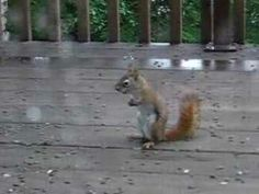 Squirrel Fight------This is WAY funnier than The Real Housewives.