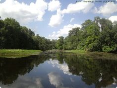 Withlacoochee River (Ocala/Marion Country in Florida)