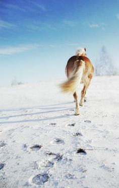 Horse leaves hoof prints in the snow Horses In Snow, Wild Horses, All The Pretty Horses, Beautiful Horses, Palomino, Majestic Horse, Draft Horses, Horse Pictures, Horse Photography