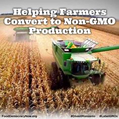 """Farmers are fed up growing GMOs,"" says David W. Nelson, president of Pedogenesis, Inc. Nelson adds that non-GMO corn hybrids produce better yields than GMO and farmers can earn premium prices with non-GMO. Learn more here: http://organicconnectmag.com/helping-farmers-convert-non-gmo-production #GMOs #nonGMO #corn #farmers #food"
