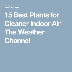 15 Best Plants for Cleaner Indoor Air Whale Video, White Whale, The Weather Channel, Cool Plants, Kayaking, Places To See, Colorado, Roller Coaster, Mafia