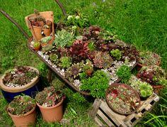 Schubkarre bepflanzen