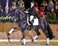 Furstenball - Oldenburg Warmblood stallion