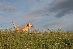 Best Five Popular Family Dog Breeds