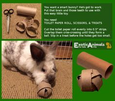 Pet Rabbit Ideas... Bunny Food Ball - Toys that are Cheap and Easy to Make. Awesome for all sorts of small animals.