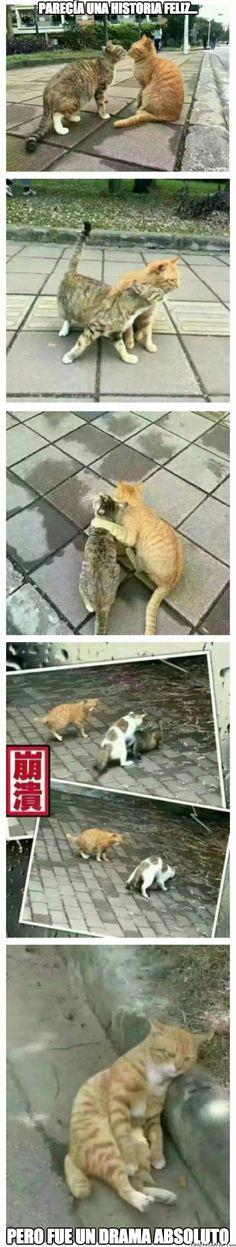 Historia triste para un gato :(        Gracias a http://www.cuantocabron.com/   Si quieres leer la noticia completa visita: http://www.skylight-imagen.com/historia-triste-para-un-gato/