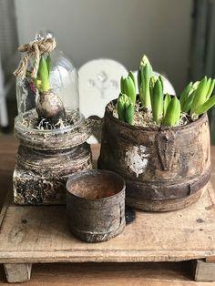 Houten plank hyacinten stolp