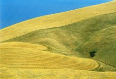 Franco Fontana  I find this work of landscapes quite repetitive, but enjoy how surreal they look.