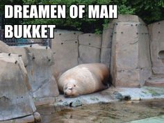 The Complete Walrus Bucket Saga - I sed bukkit not penquins