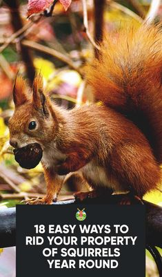 How To Get Rid Of Squirrels With Baking Soda Get Rid Of