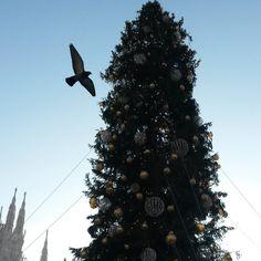 #milano #milanodavedere #xmasthree #bird #duomodimilano #piccione #milanocolsole #oggiamilano #noi #instalove #instaday #vivimilano by michy.sm