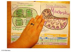 Photosynthesis VS. Cellular Respiration FOLDABLE - Welcome to Mrs. G's Classroom