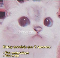 Cute Love Memes, Funny Love, Spanish Phrases, Spideypool, Me Too Meme, Cute Puppies, Crushes, Stickers, Feelings