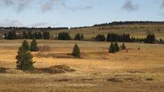 SeniorTip - rašeliniště v Krušných horách (Nord Bohemia), foto Květa Roznětínská
