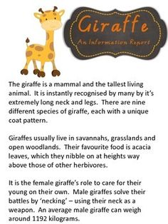 Informational Giraffe report pack including worksheets  $2.00