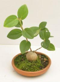 Magenta, Html, Plants, Single Wide, Flowers, Plant, Planets