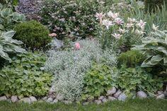 Perennapenkki Garden Inspiration, Plants, Gardening, Lilies, Lawn And Garden, Plant, Planets, Horticulture