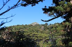 森から浮かび上がる、大岩の頭。