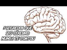 5 Segredos que seu Cérebro nunca te contou - YouTube
