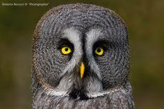 0|0 Owl by Roberto Becucci, via 500px