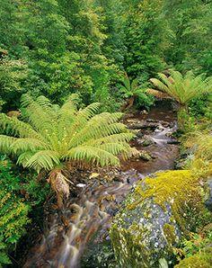 Tasmania's Tarkine Wilderness
