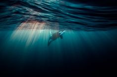 alone in the twilight Photo by Janine Marx -- National Geographic Your Shot
