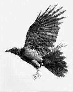 crow.jpg (600×760)