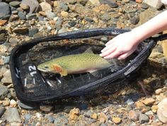 During the purchase of fly fishing nets, we encourage fishers to look at the size, net bag and cost. Fly Fishing Net, Trout Fishing, Giant Fish, Little Fish, Rainbow Trout, How To Look Better, Net Bag, Pure Products, Stuff To Buy