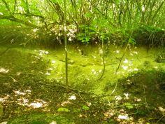 Forêt d'Elincourt 2013   Venez découvrir les forêts de l'Oise !   © Oise Tourisme Oise, 2013, Aquarium, Tourism, Goldfish Bowl, Aquarium Fish Tank, Aquarius, Fish Tank