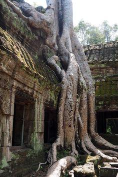 Le temple d'Angkor Ta Prohm. Cambodge.