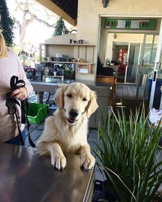 I also enjoy when customers bring their dogs to my work!   http://ift.tt/2mvLYso via /r/dogpictures http://ift.tt/2mSqaIr  #lovabledogsaroundtheworld