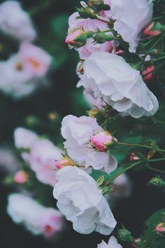 Flowers, retro style
