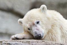 zauberhaft - Bild & Foto von Anja Anlauf aus Eisbärenkinder - Fotografie (34557062) | fotocommunity