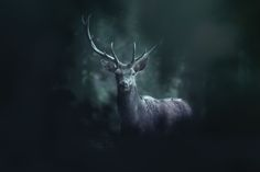 In The Woods - Animal photography portfolio. Photos by David Drbal - Bears, Dears, Moose and more animals living in Europe. Photography Portfolio, Animal Photography, Wood Animal, Living In Europe, Animals, Behance, Deer, Woodland Forest, Animales