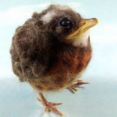 The best baby robin