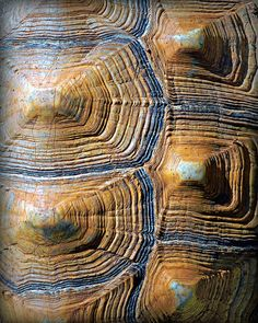 turtle shell pattern - like canyons Natural Forms, Natural Texture, Patterns In Nature, Textures Patterns, Carapace, Turtle Pattern, Texture Art, Tortoise Shell, Belle Photo