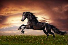 Resultado de imagen para imagenes de caballos
