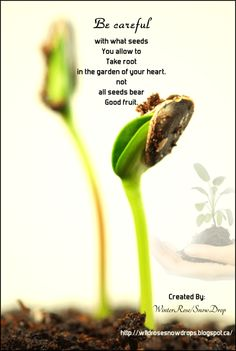 My Poems, Recipes, English & Sinhala Lyrics, Quotes.....: Be Careful with what seeds you allow to....