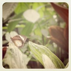 Penang butterfly farm, Malaysia Plant Leaves, Butterfly, Plants, Travel, Viajes, Destinations, Plant, Traveling, Trips