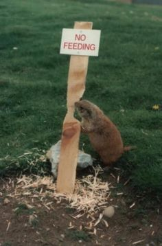 25 Funny Animal Signs